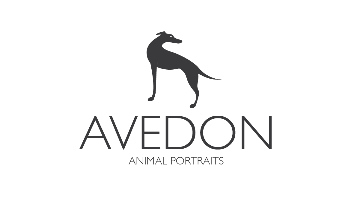 Palmerston North Pet Photographer - Avedon Animal Portraits