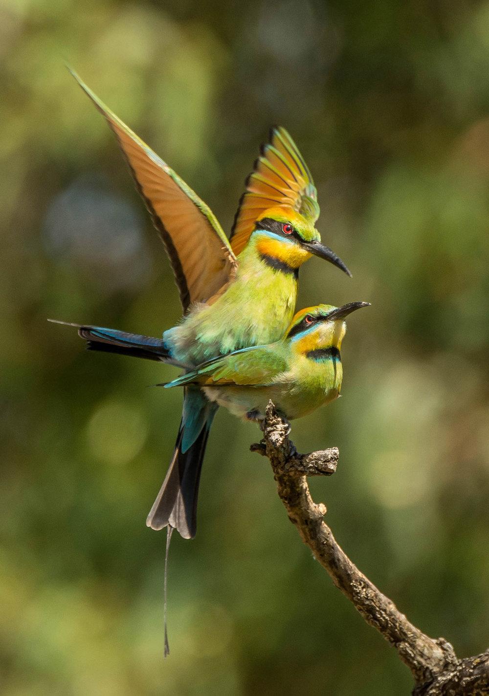Mating Season by Jan Robinson