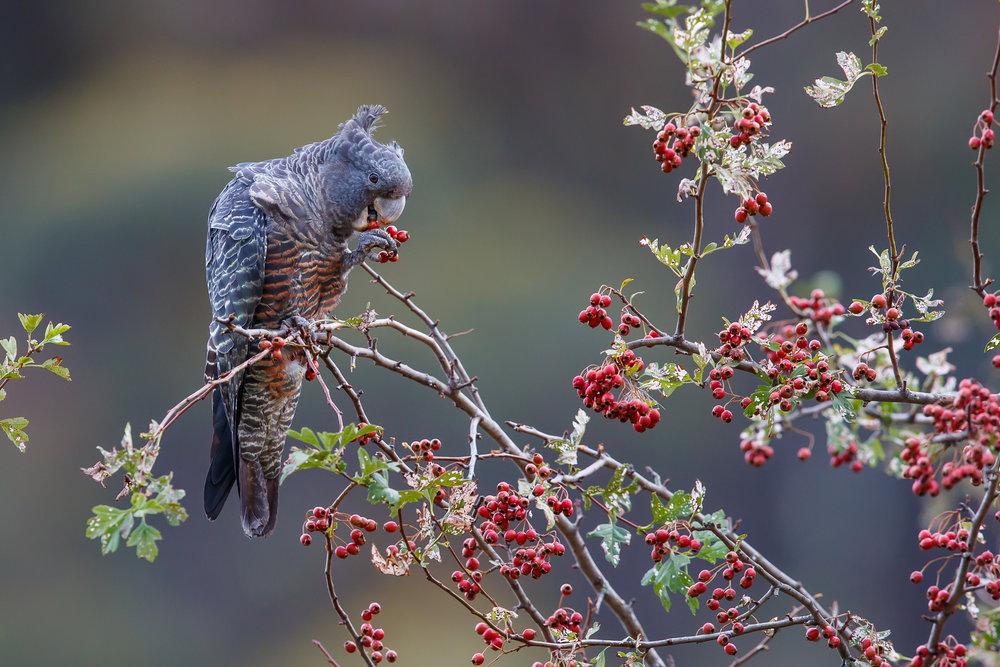 Berries for Breaky by Michael Hanvey