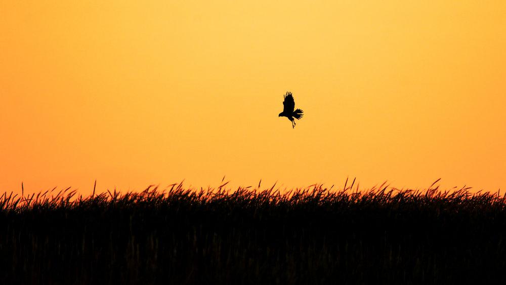 The sunset hunter by Wilson Lennard