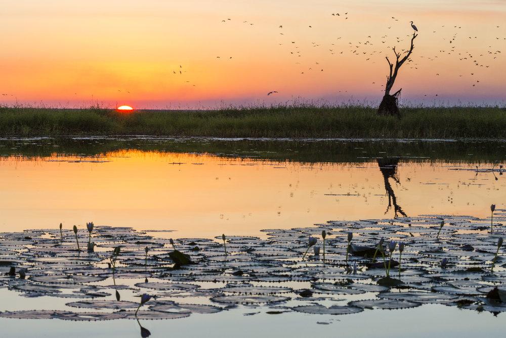 Wetland Sunset by Cathryn Vasseleu