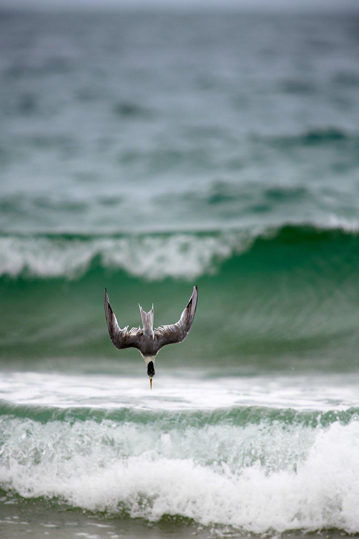 Diving by Sar Nop