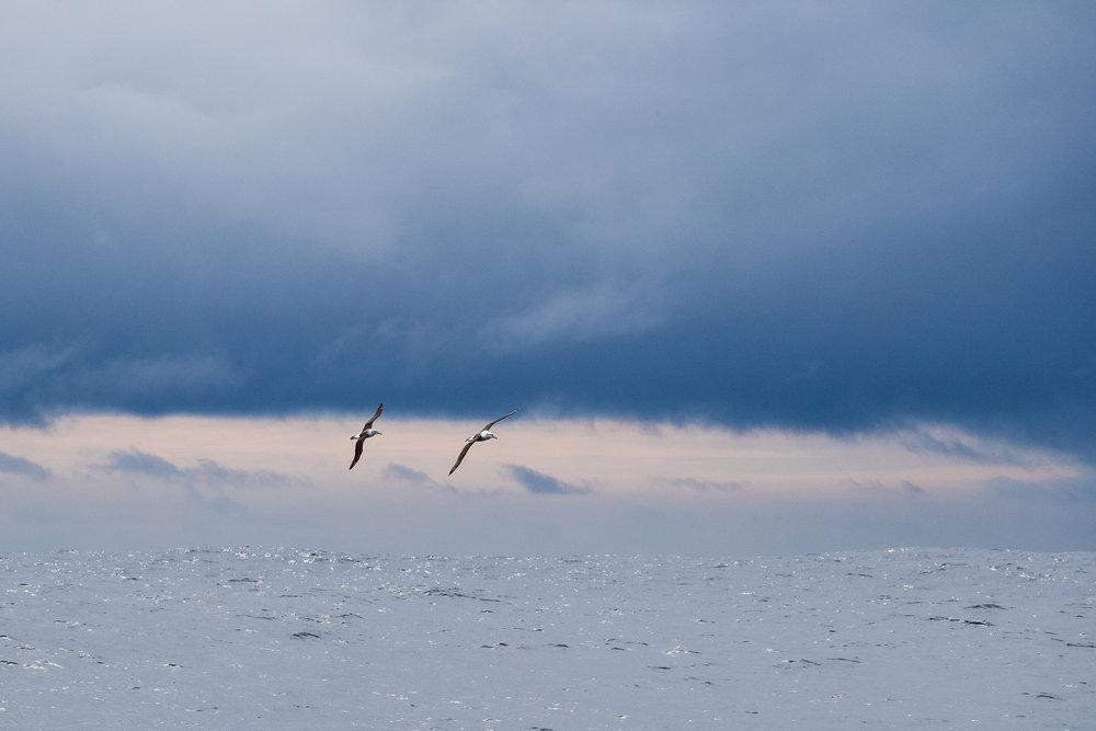 Gloomy Gliders by Nicolas Rakotopare