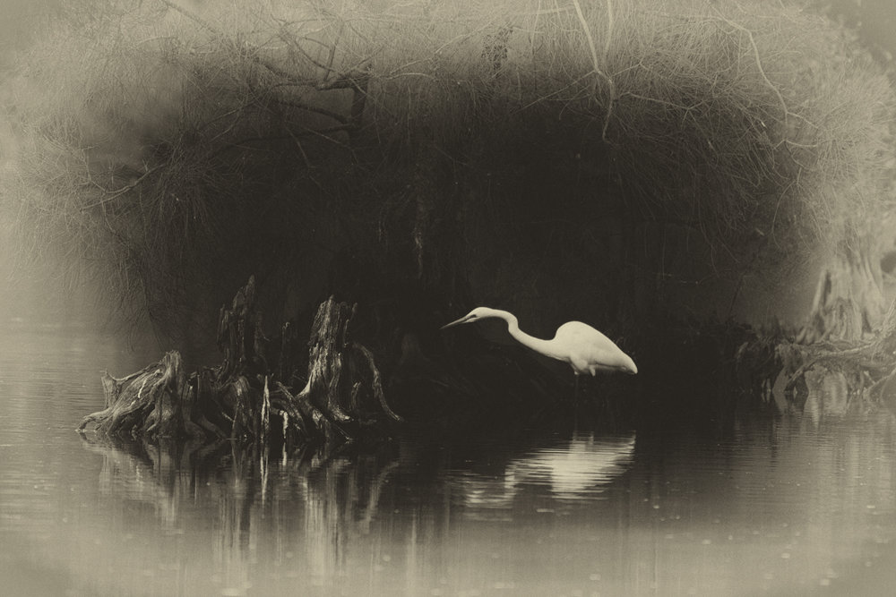 Egret Hunts in Eerie Pond by Janette Rodgers