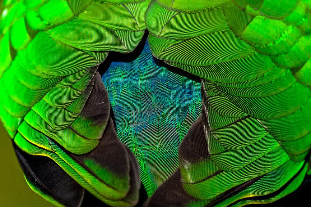 Vivid Green by Tim Freer