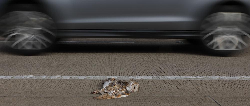 Road Kill by Con Boekel