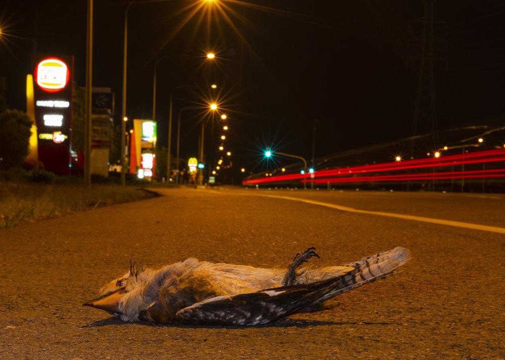 Iconic Roadkill by Heyn De Kock