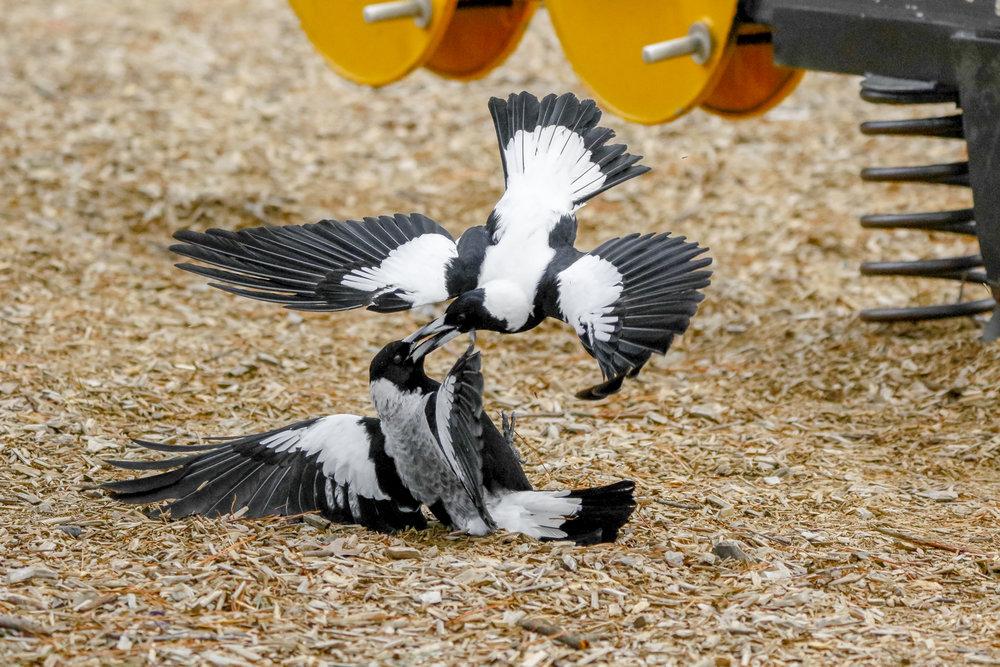 Playground Brawl by Keir Sinclair