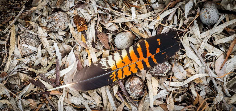 Fallen Feather by Peter Rowland