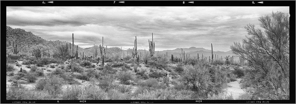 Saguaro_Vista_WEB.jpg