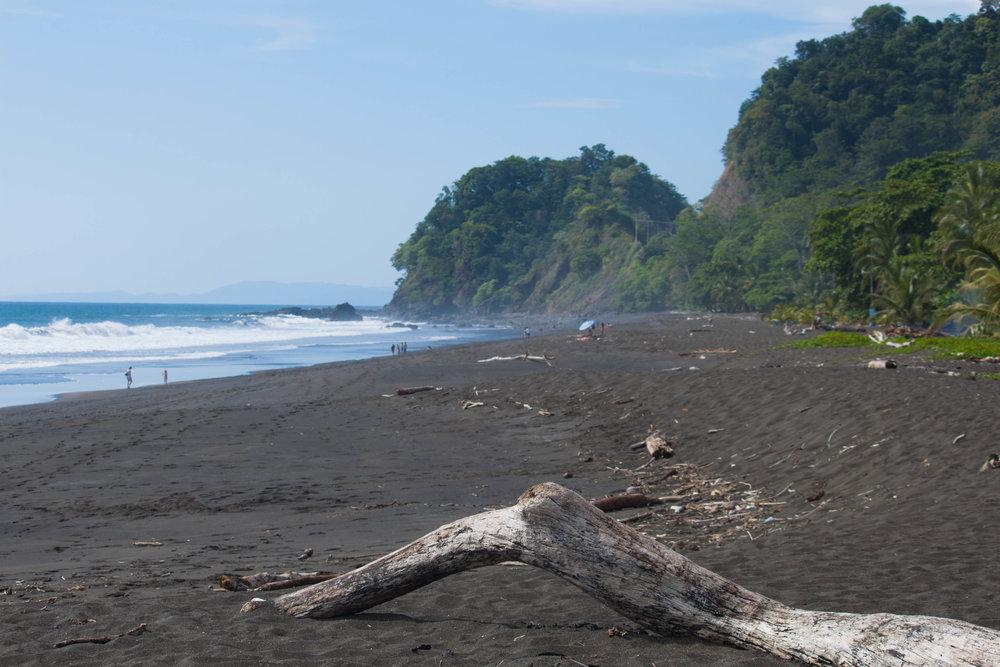 driftwood - playa hermosa, costa rica