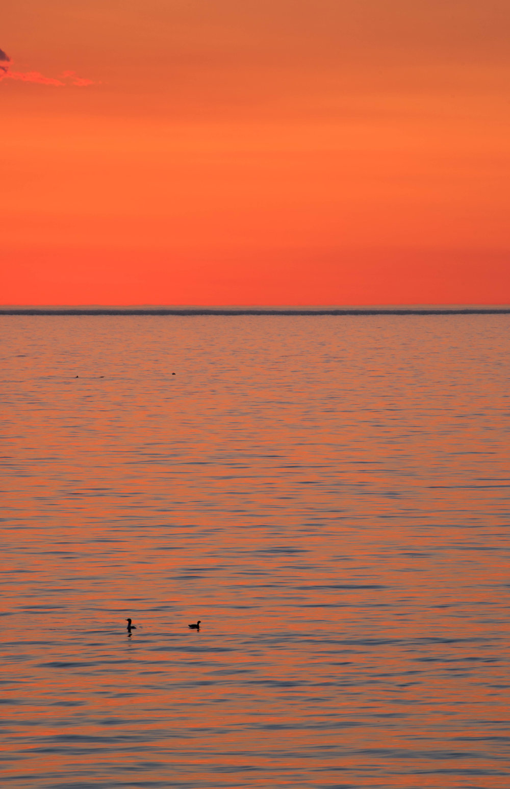 sunrise ducks.jpg