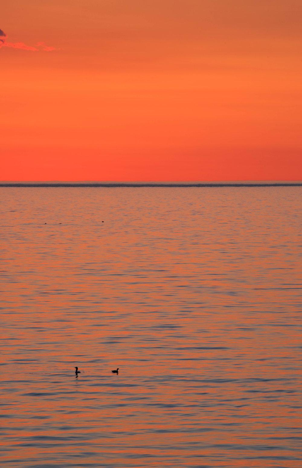 sunrise ducks - silver bay, minnesota   from US$15