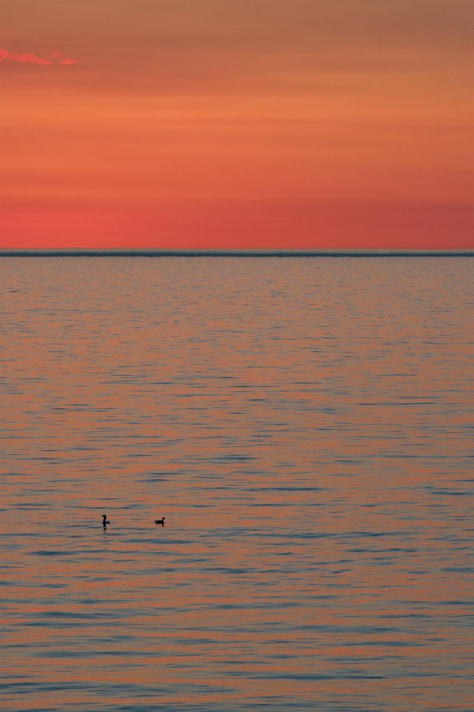 sunrise ducks - silver bay
