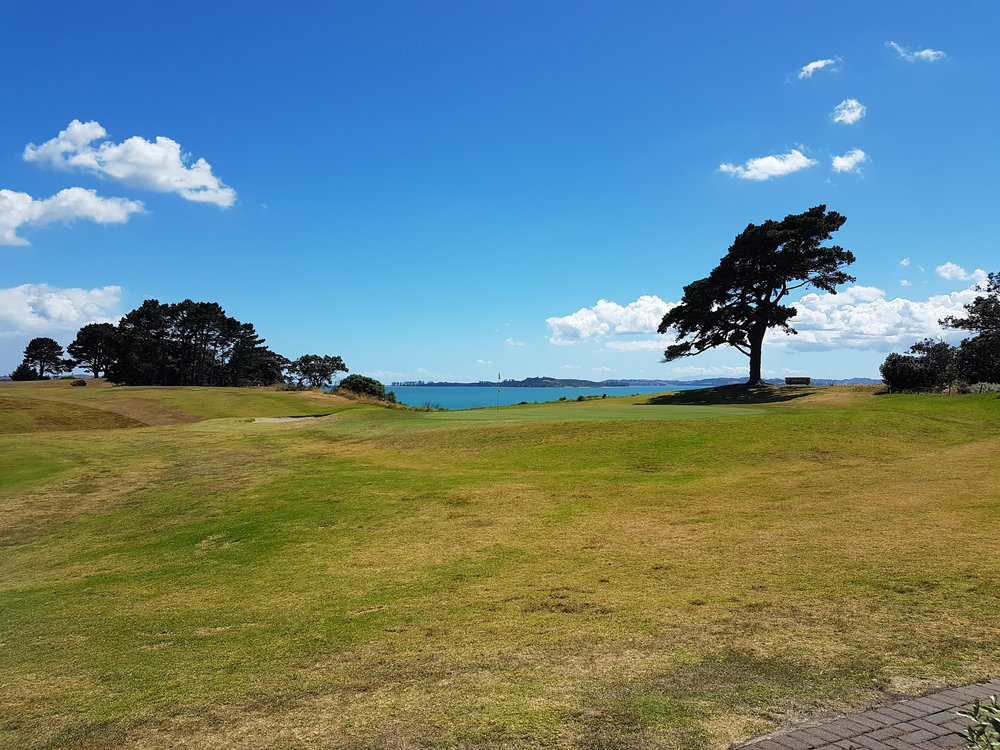The Famous Howick Golf Club Tree overlooking the 18th.jpg