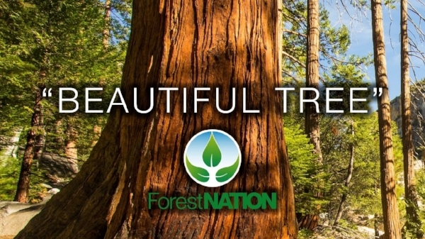 FOREST NATION