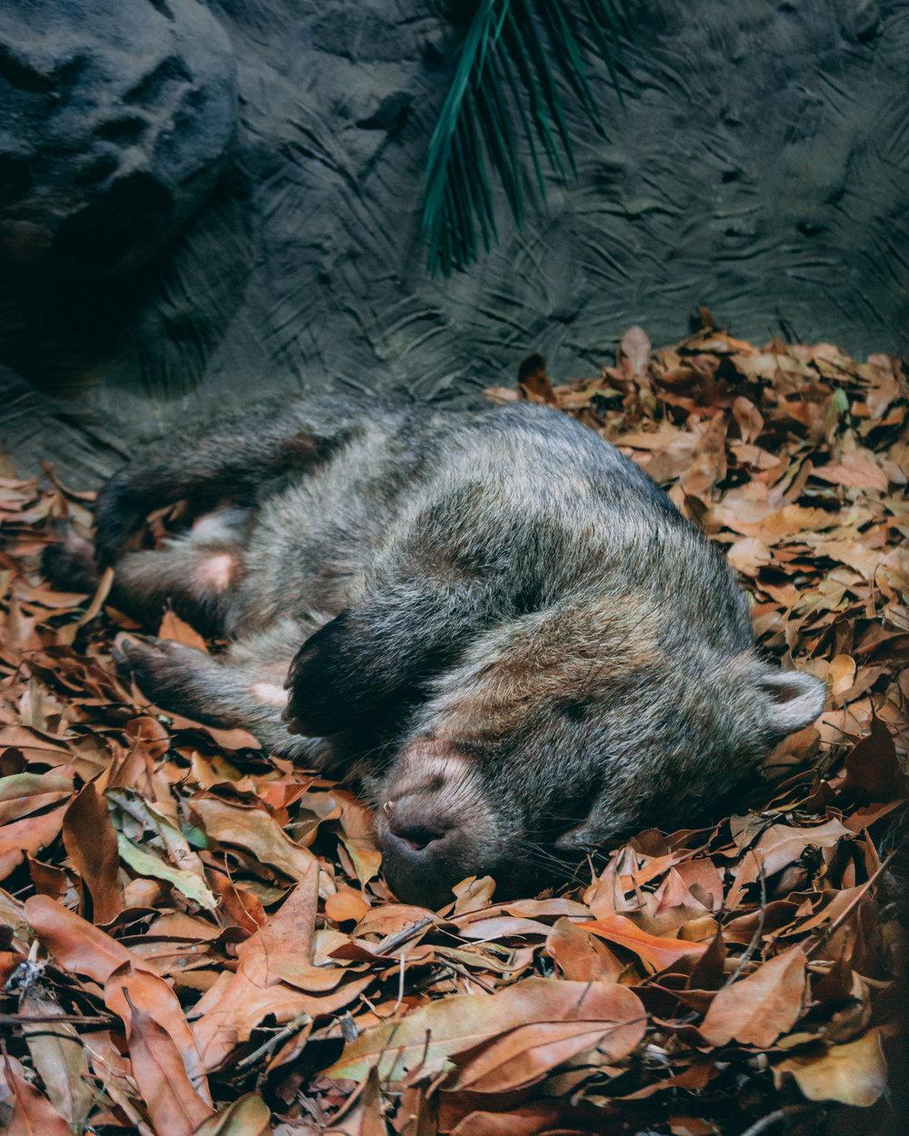 Wombat (1).jpg