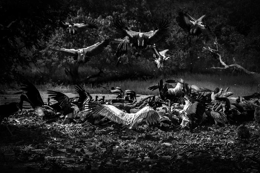 Feast Among Dead Bones ii