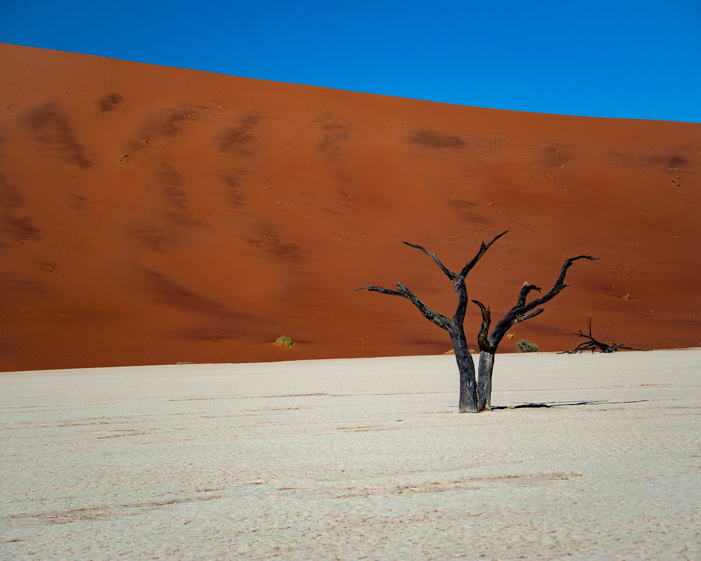 """Single Tree on a Dry Lake Bed""  Photographed by Ron Foster         Sossusvlei, Namibia, Africa"