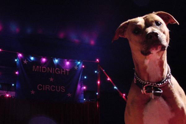 Lola_Midnight_Circus.jpg