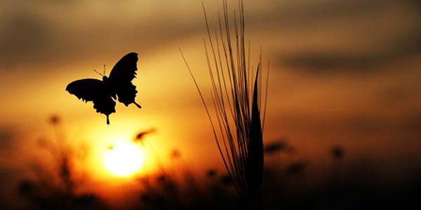 butterfly-release-for-memorial-service.jpg