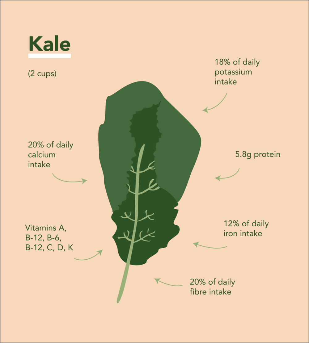 Illustration of Kale