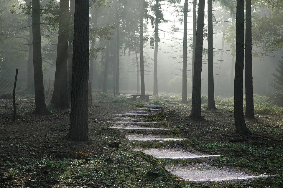 forest-1581471_960_720.jpg