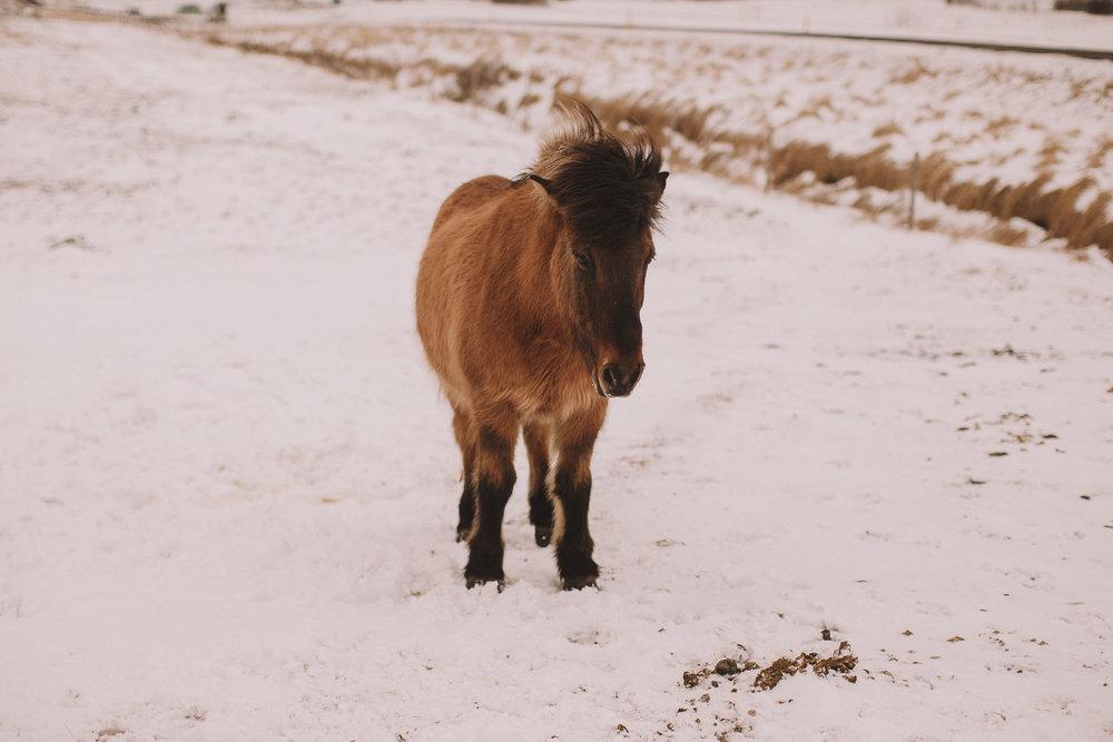 Road-trip-Islande-Iceland-Voyage-Travel-Portrait-Jérémy-Boyer-Geysir-Geysers-Horse-snow-ice-Gullfoss-1.jpg