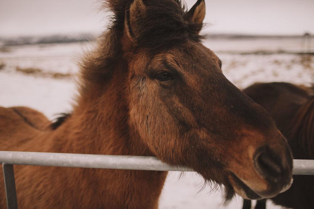 Road-trip-Islande-Iceland-Voyage-Travel-Portrait-Jérémy-Boyer-Geysir-Geysers-Horse-snow-ice-Gullfoss-2.jpg
