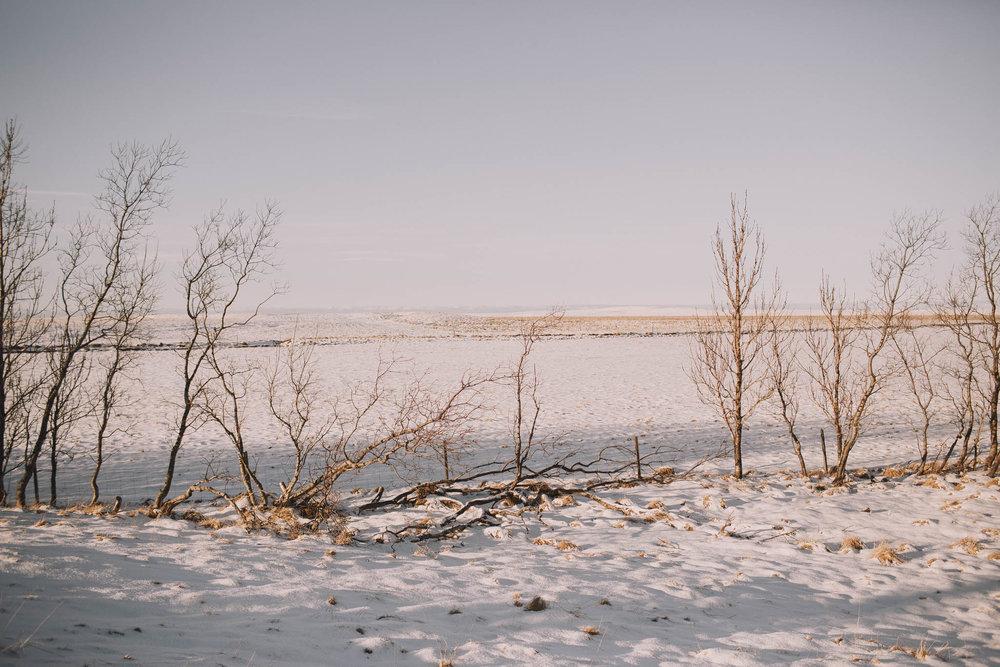 Road-trip-Islande-Iceland-Voyage-Travel-Portrait-Jérémy-Boyer-Sunny-day-dog-snow-1.jpg