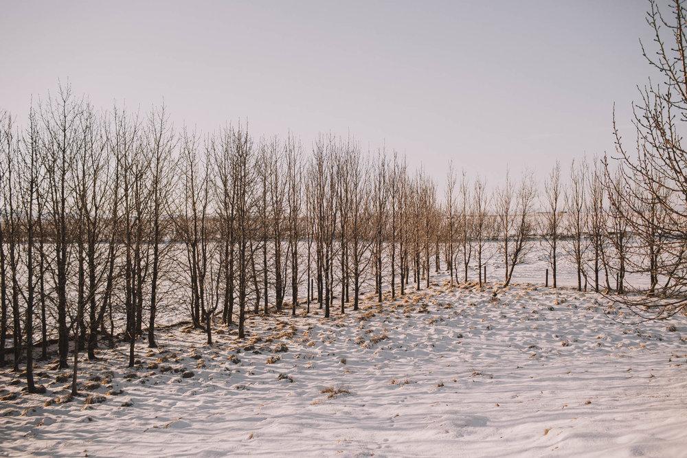 Road-trip-Islande-Iceland-Voyage-Travel-Portrait-Jérémy-Boyer-Sunny-day-dog-snow-4.jpg
