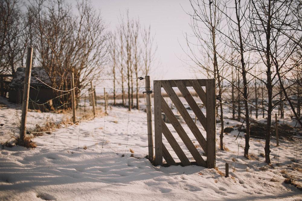 Road-trip-Islande-Iceland-Voyage-Travel-Portrait-Jérémy-Boyer-Sunny-day-dog-snow-7.jpg