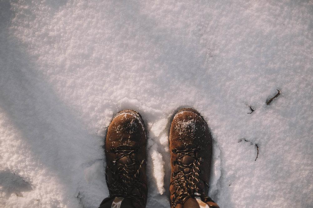 Road-trip-Islande-Iceland-Voyage-Travel-Portrait-Jérémy-Boyer-Sunny-day-dog-snow-9.jpg