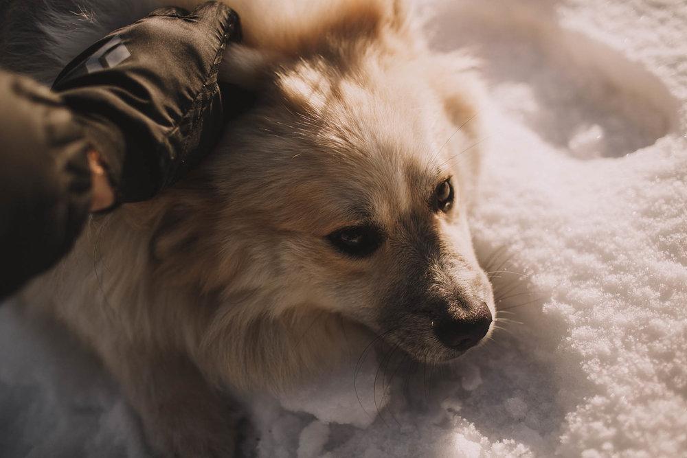 Road-trip-Islande-Iceland-Voyage-Travel-Portrait-Jérémy-Boyer-Sunny-day-dog-snow-12.jpg