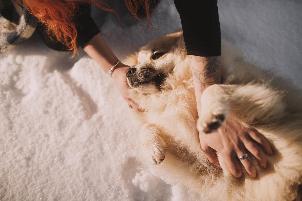 Road-trip-Islande-Iceland-Voyage-Travel-Portrait-Jérémy-Boyer-Sunny-day-dog-snow-15.jpg