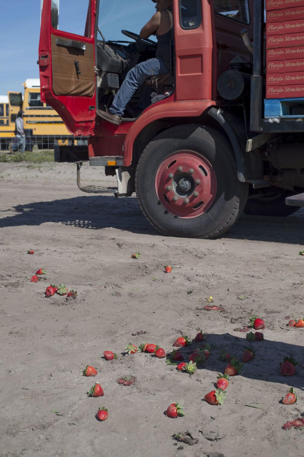 zwStrawberryRobot32.JPG
