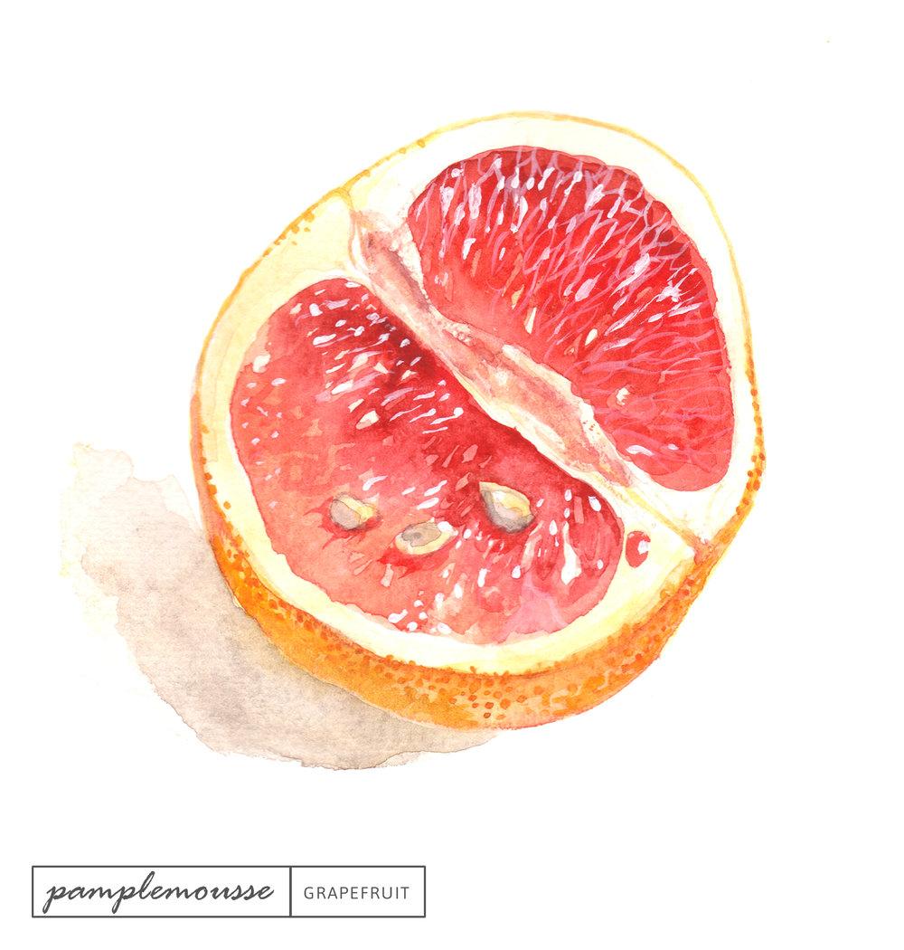 Laetitia_Eaton_watercolor_grapefruit