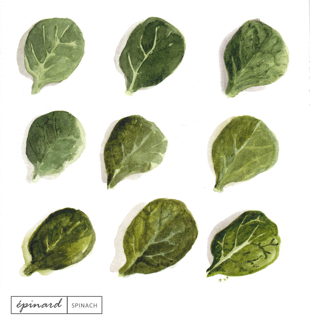 Laetitia_Eaton_watercolor_spinach