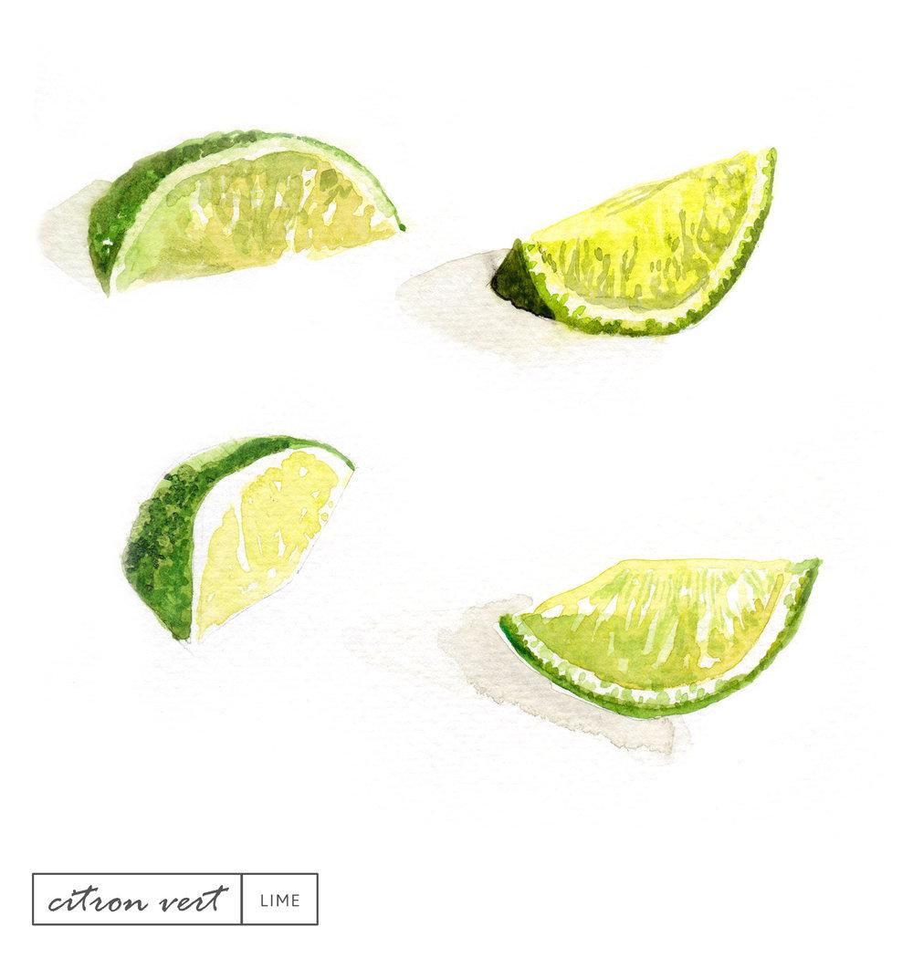 Laetitia_Eaton_watercolor_lime