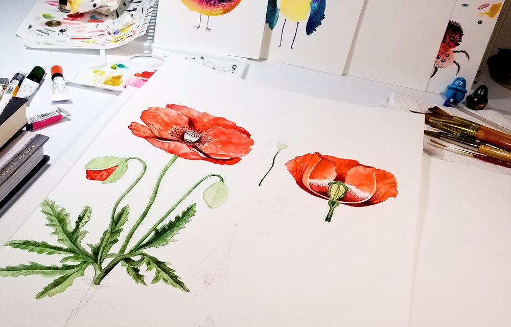 Laetitia_Eaton_watercolor_poppy_flowers.jpg