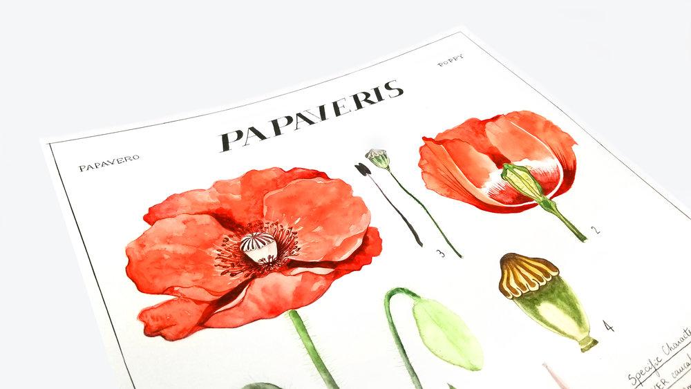 Laetitia_Eaton_watercolor_poppy_flowers_closeup2.jpg