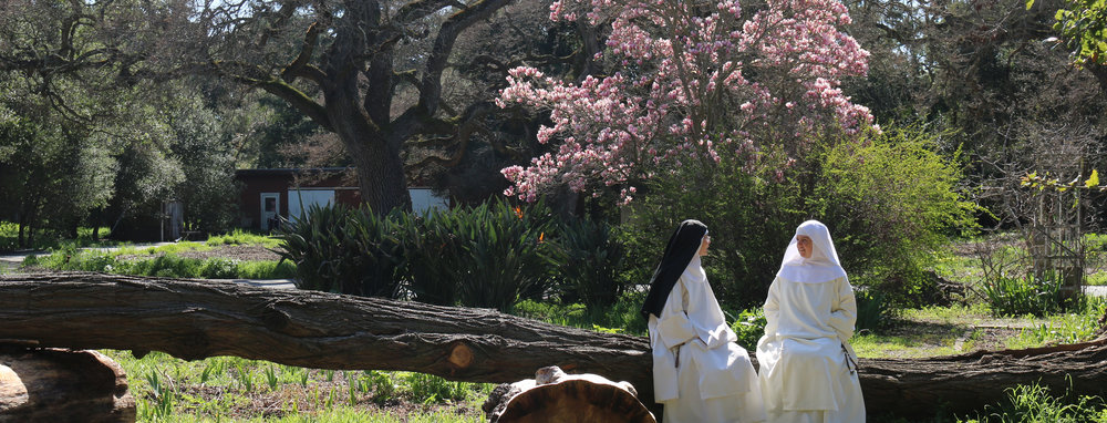 Nuns sitting under tulip tree IMG_4107.jpg