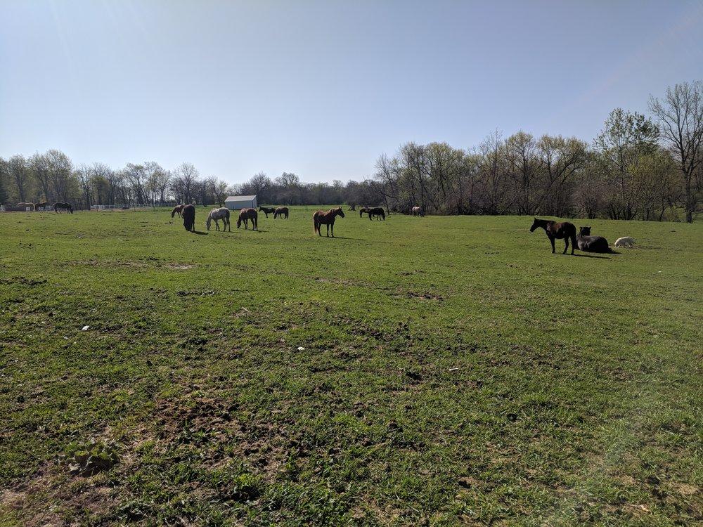pasture6.jpg