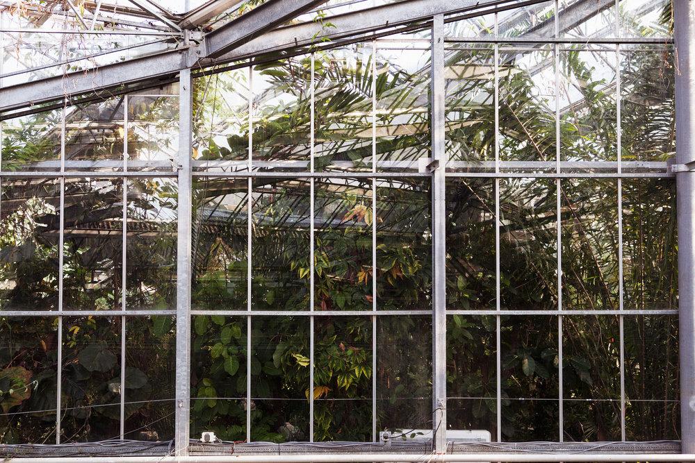 Hortus Botanicus Mama Botanica_23.jpg