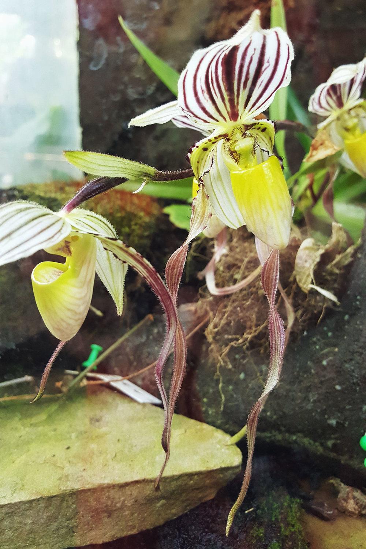 Orchideeen die zelfs ik mooi vind!