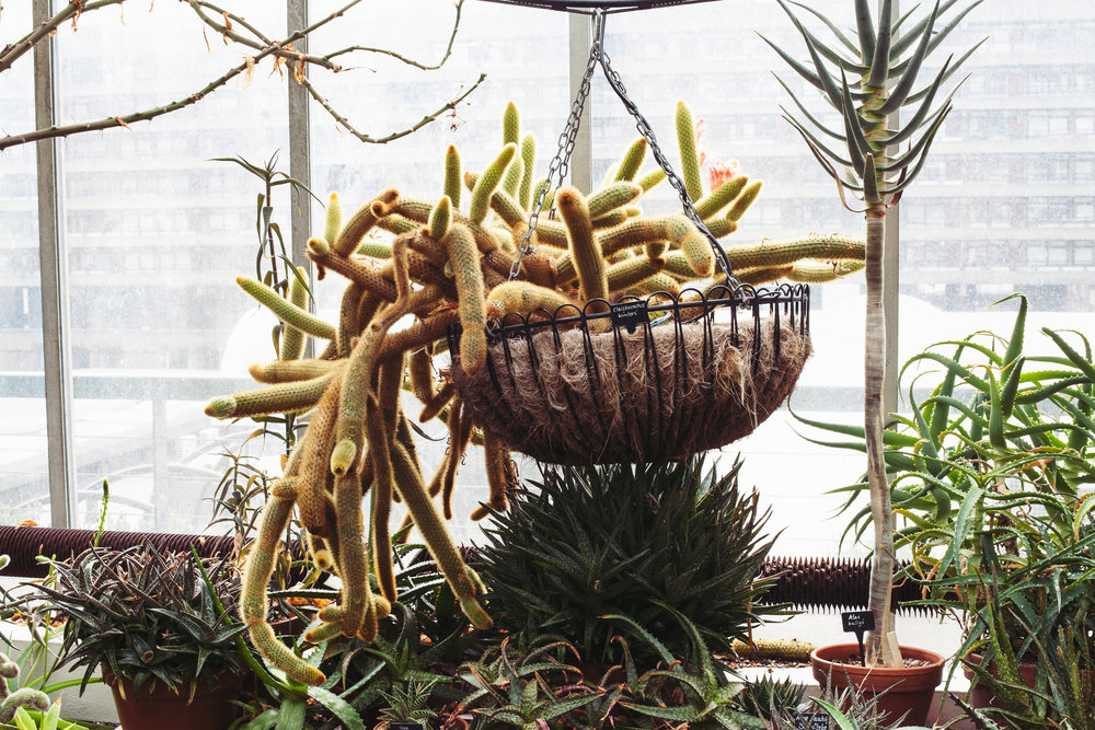 Barbican Conservatory Mama Botanica_12.jpg