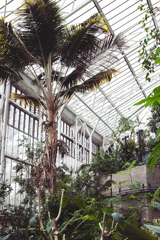 Barbican Conservatory Mama Botanica_08.jpg