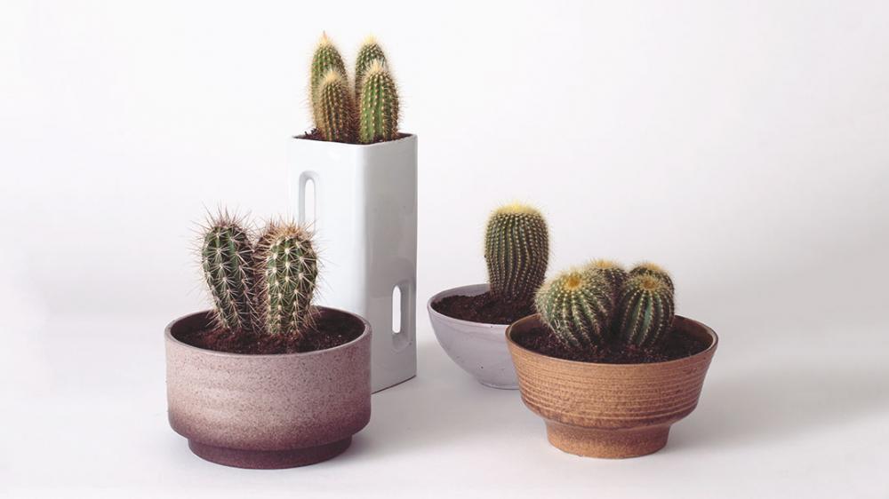 2 tips om je cactussen gelukkig te maken.jpg