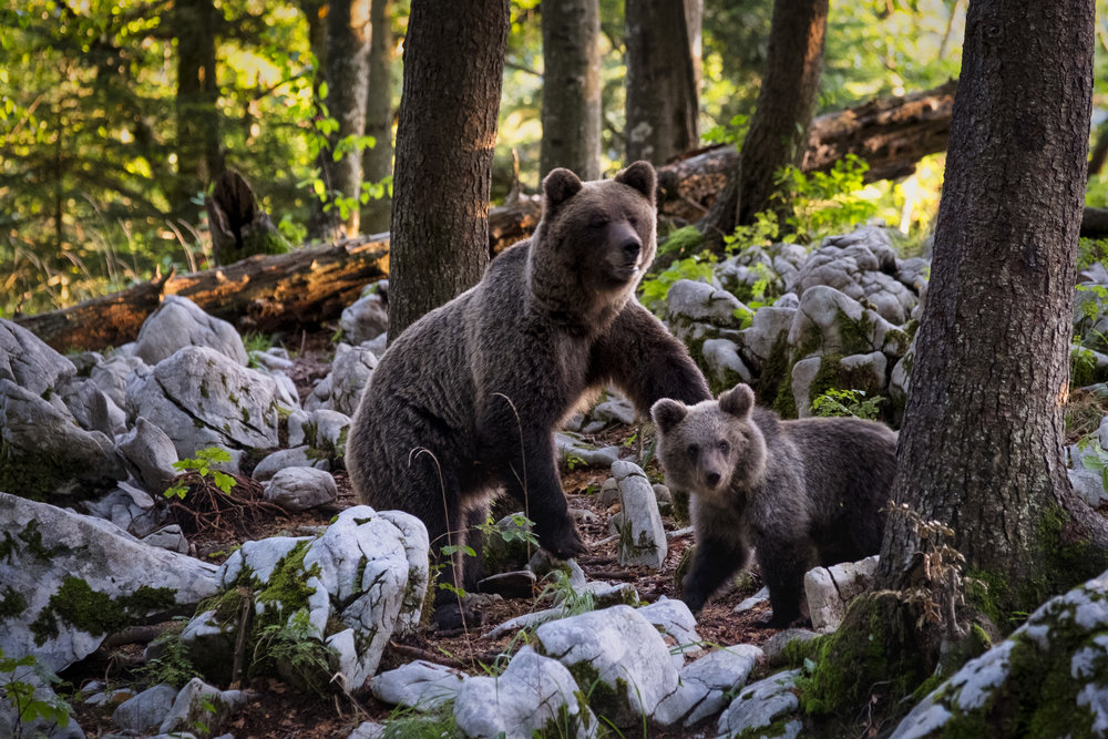 You're a Mama Bear - Results of quiz will go here. This is placeholder text. Bears bears bears. Goldilocks and the Three Bears.