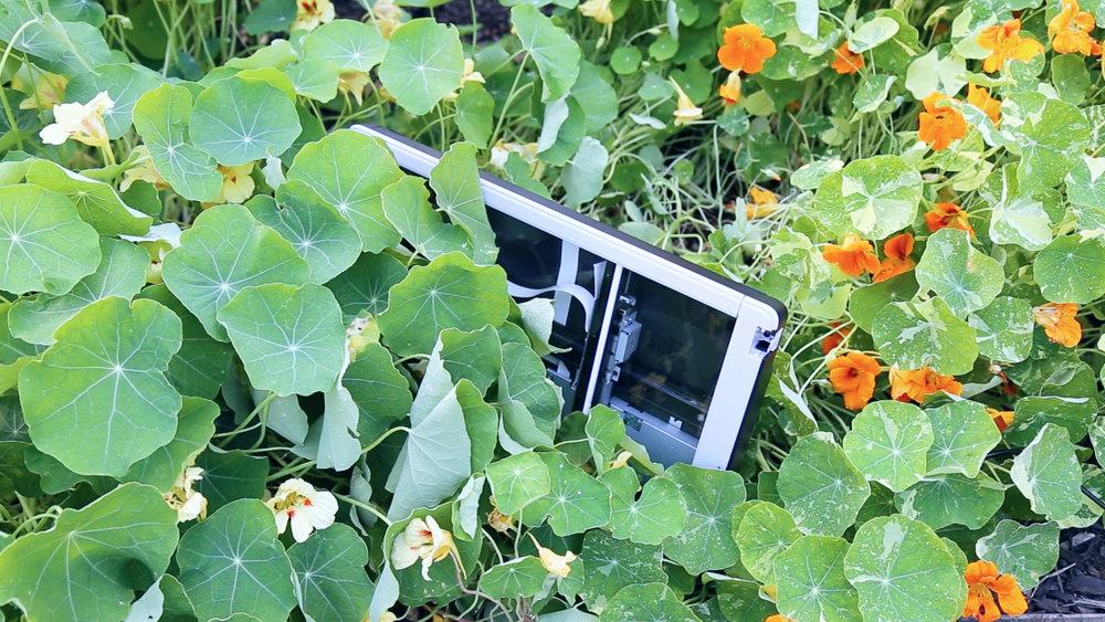 gardenscan.jpg